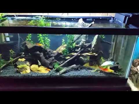 My Brackish Tank while I discuss some brackish basics.