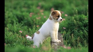 Những chú chó hài hước nhất thế giới - chó cưng và em bé   Kênh chó mèo