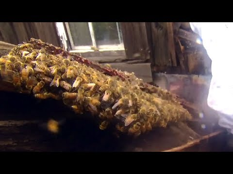 Buzz off: Crews work to remove 80,000 bees from home