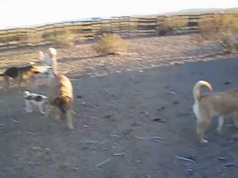 Boarding Dogs Las Vegas Nevada
