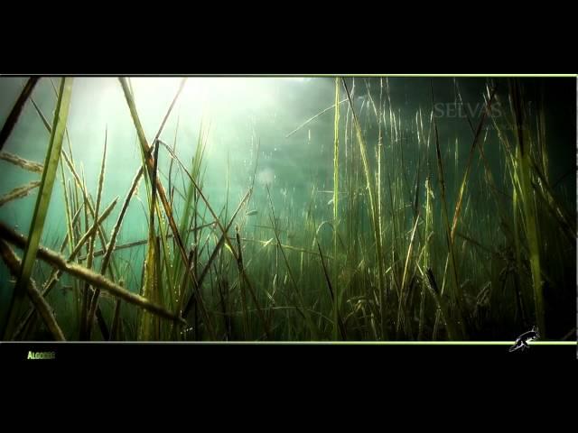 Algodre. Vídeo de José Antonio Valverde (buzo) sobre los fondos de las Lagunas de Ruidera