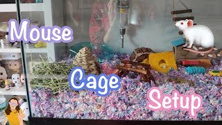 Setting Up my Mouse Cage! 🐁   Kelli Maple