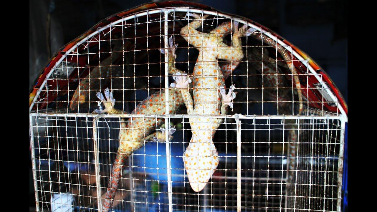 Local Animal Market Jakarta Indonesia Youtube