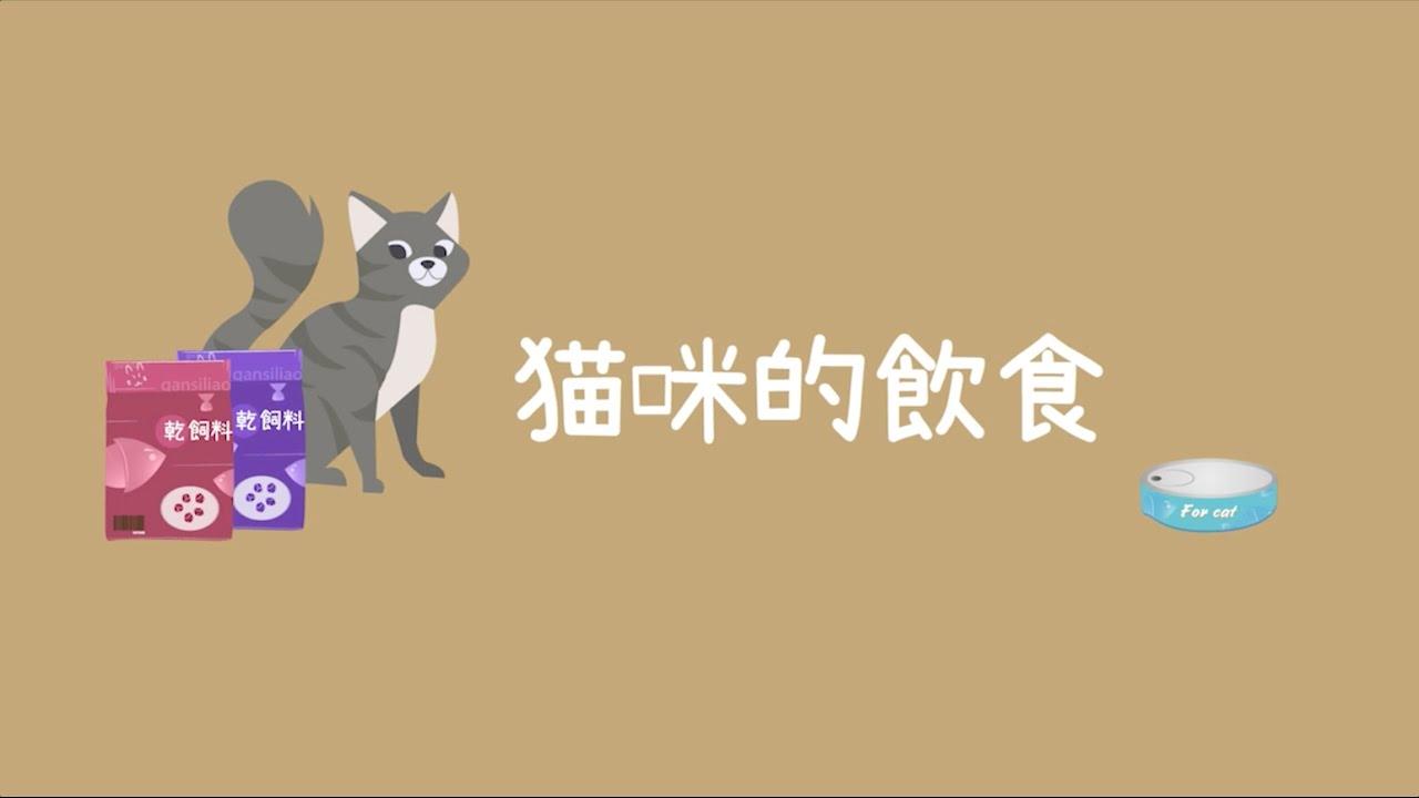 飼料VS罐頭,貓奴必知的二大重點