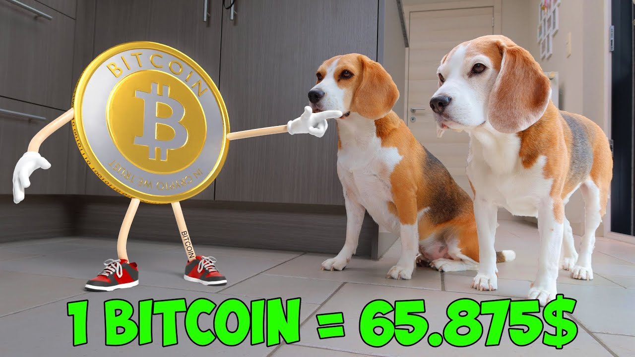 Bitcoins pictures of dogs live betting fanobet