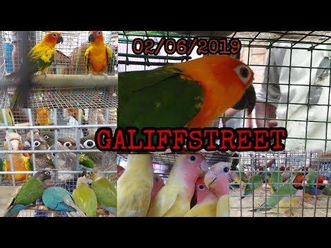 ALL BIRDS PRICE AT GALIFFSTREET BIRDS AND PET MARKET KOLKATA 02/06/2019 HD