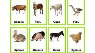 Карточки Домана. Первые слова для малыша. Домашние животные и птицы.