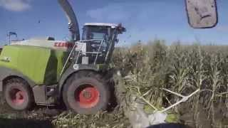 Corn Silage Harvest at S&S Jerseyland Dairy Farm in Wisconsin