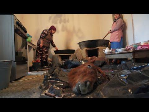 Tradiciones extrañas de una familia de Asia Central | KIRGUISTÁN 🇰🇬🐴