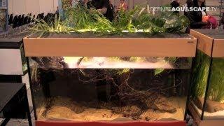 Aquascaping - Aquarium Ideas from PetFair 2013, Łódź, Poland, pt.6
