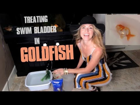 TREATING A CASE OF OVERFEEDING GOLDFISH