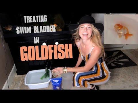 TREATING A CASE OF OVERFEEDING GOLDFISH