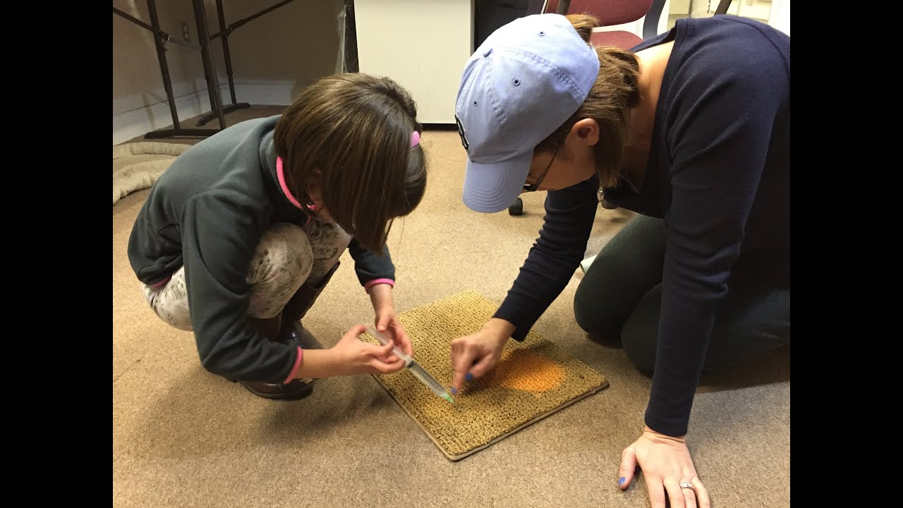 Bleach Spot Correction-Dyeing Nylon Carpet