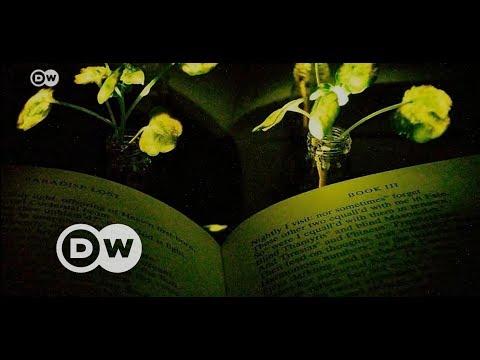 Bitkiler lambaların yerini almak üzere - DW Türkçe