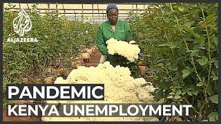 Coronavirus lockdowns hit flower farms in Kenya