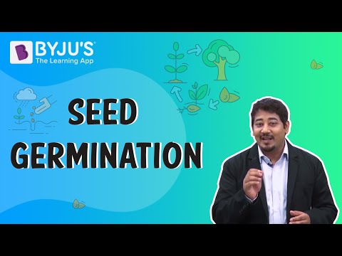 Seed Germination - BYJU'S