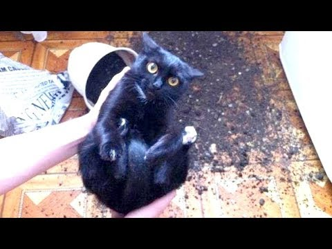 Thumbnail: WARNING: You may DISLOCATE YOUR JAW FROM LAUGHING - Best FUNNY CAT videos