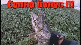 От этой приманки рыба в шоке !!
