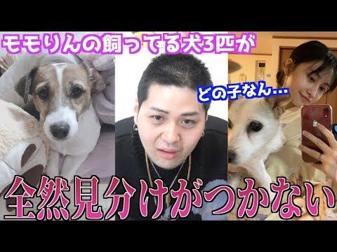 【難問】TWICEモモの愛犬、名前言い当てれるかクイズやったら難し過ぎたwww
