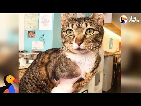 LIVE: Adoptable Three Legged Cat at NYC Cat Cafe | The Dodo LIVE