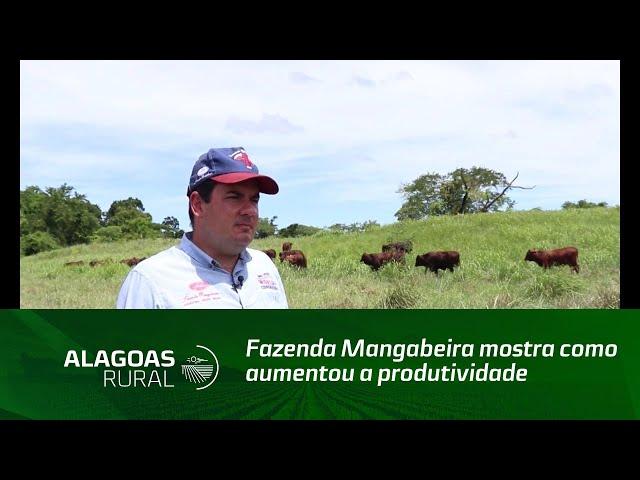Fazenda Mangabeira mostra como aumentou a produtividade do gado