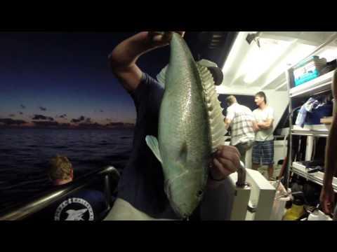 Spearfishing - Coral Sea 2013