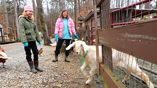 How DO The  Goats React When We Let Them OUT?!?