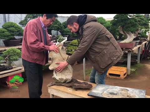 Process of making rock for rock planting by Masahiko Kimura.