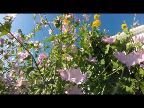 Sounds of bees, bumble bees, flies, crickets - lovely summer sounds - ❀ Sound Therapy
