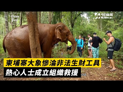 柬埔寨大象慘淪非法生財工具 熱心人士成立組織救援