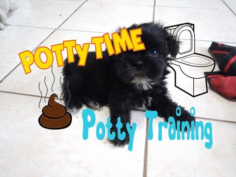 How to potty train your shih tzu puppy [HD slideshow video]