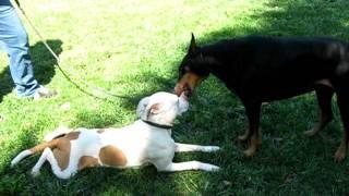 1) Flicka At All Star Dog Training