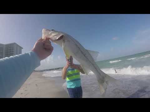 Light Tackle Snook Fishing From The Surf (Sarasota Florida- June 2019)