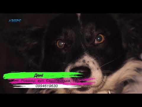 ТРК Аверс: Візьми тварину у родину Дені