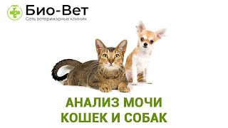 Анализ мочи кошек и собак