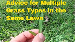 How to Handle Multiple Grass Types in the Same Lawn