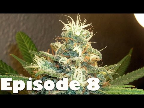 Farcry 4 Walkthrough Gameplay (Xbox One, PS4) Episode 8 - Smoking Strong Weed
