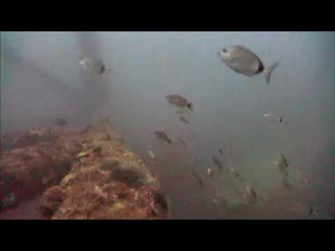 Sharks in the Atlantic Cam 05-21-2017 03:00:10 - 04:00:06
