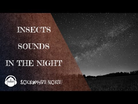 Insects Sounds At Night To Fall Asleep Fast