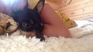 Собаке мешают спать ;)