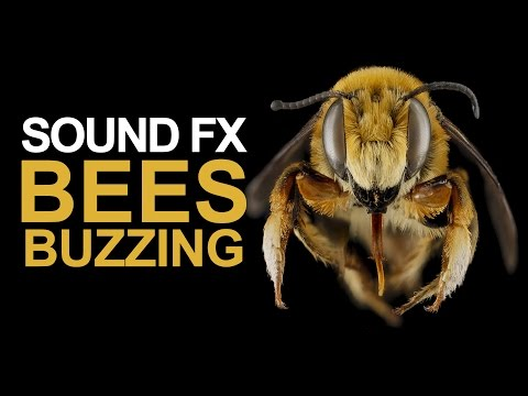 BEES BUZZING | Sound Effect [High Quality]