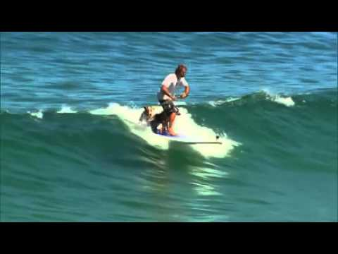 Incredible SUP Dog Surfing
