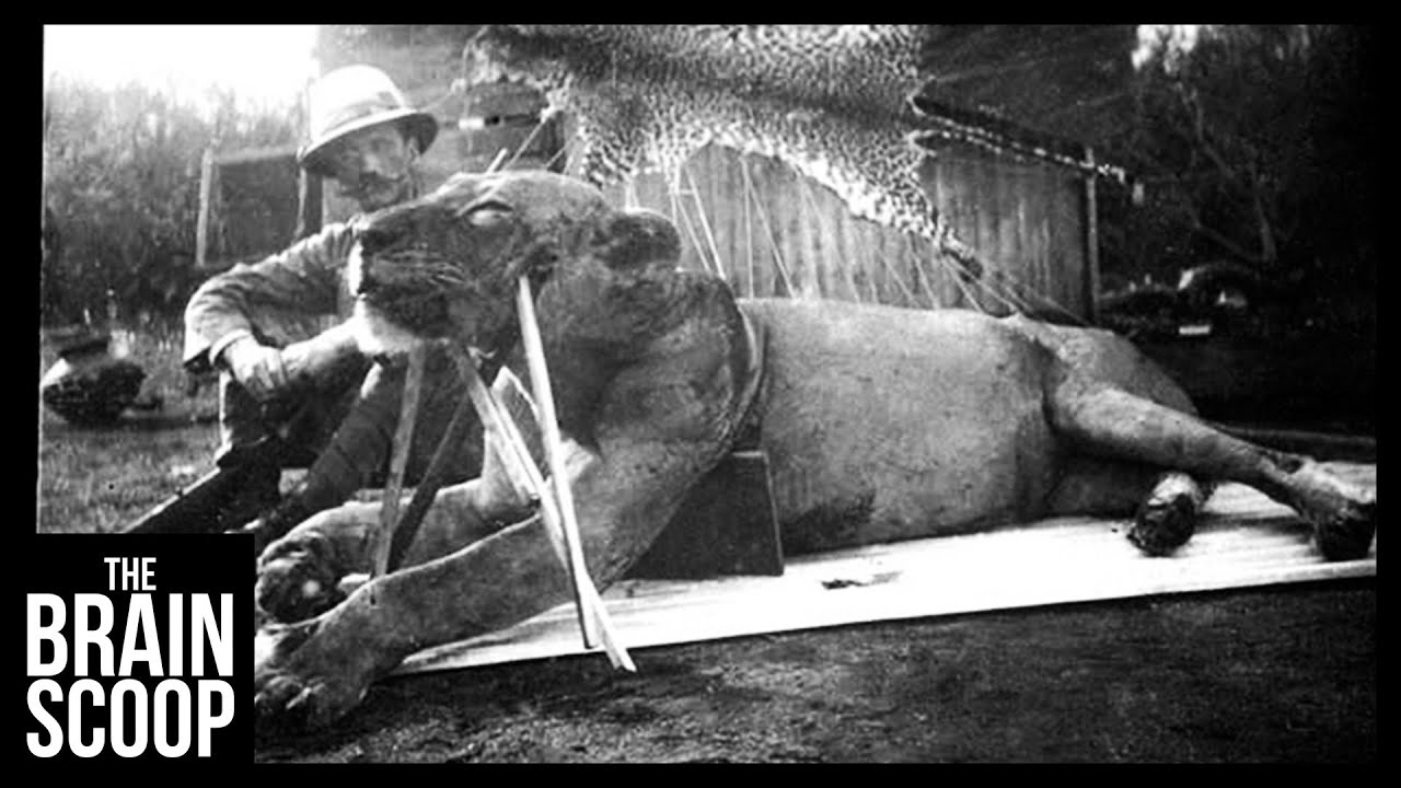 Download The Man-Eating Lions of Tsavo