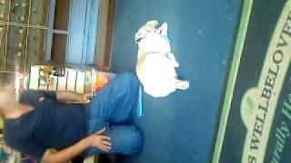 Puggle- Pug X Border Terrier