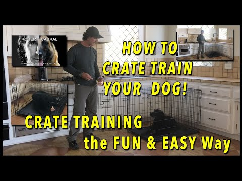 CRATE Training Your Dog  - EVERYTHING You Need to Know to Get YOUR DOG to LOVE the CRATE