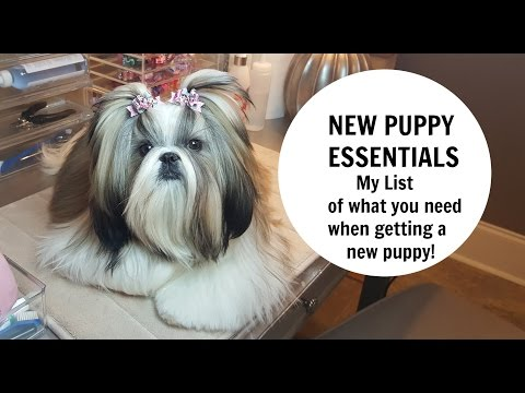 NEW PUPPY ESSENTIALS - What you need when getting a new puppy!