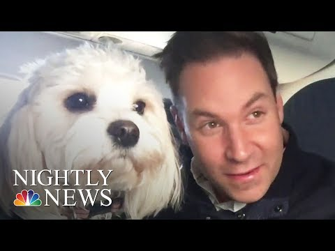 Download Youtube: Delta Issues New Rules On Emotional Support Animals | NBC Nightly News