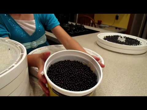 Baixar Preserving the Harvest: Elderberries