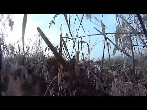 Пошёл искать битую утку, а набрёл на гуся + 3 утки с 2-х выстрелов! Читайте описание под видео!!!!