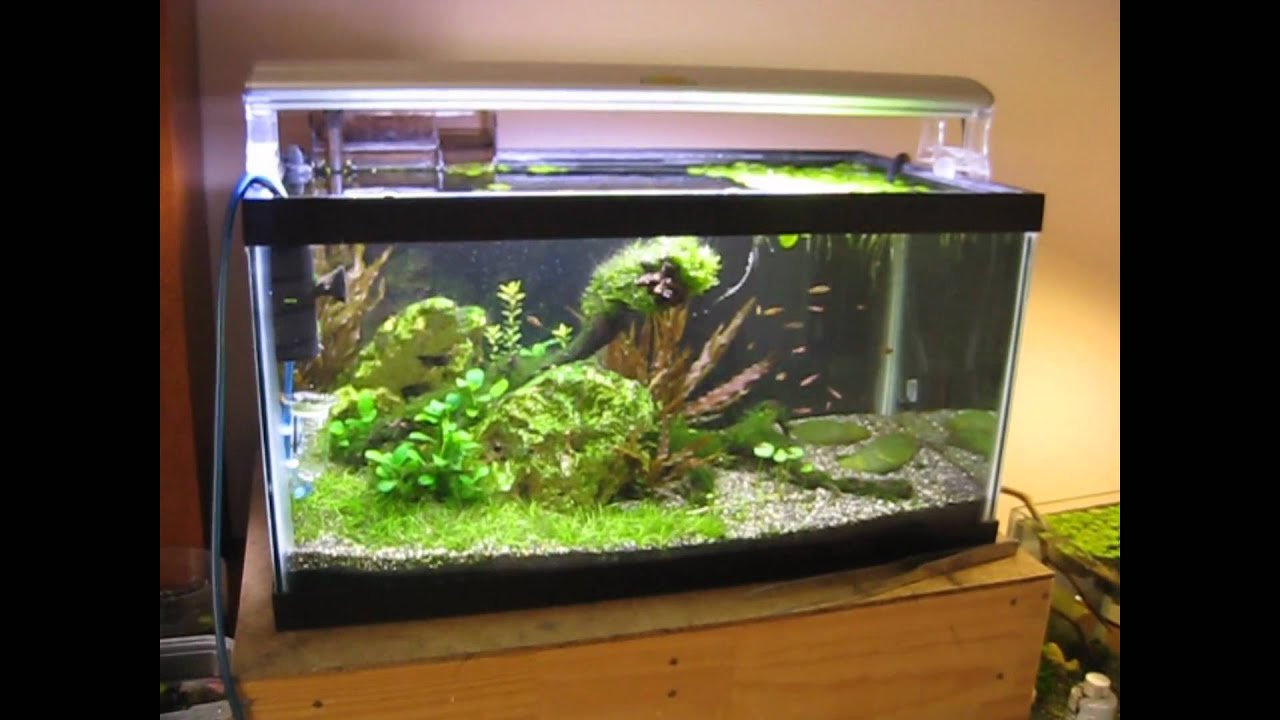15 gallon fish tanks images galleries for Fish for 2 gallon tank